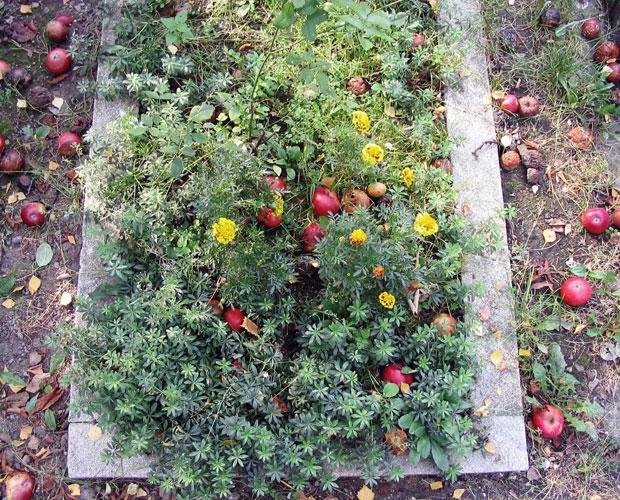 cmentarz, grób, jablko